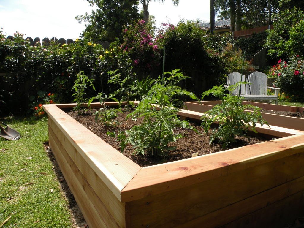building vegetable boxes for a greek garden california