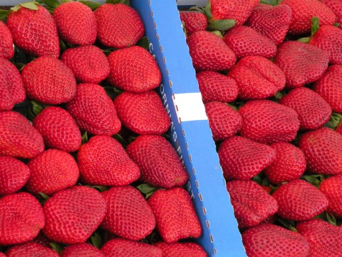 Post image for Strawberry Fields Forever!