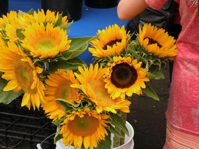Post image for A Visit to Santa Barbara's Farmers Market
