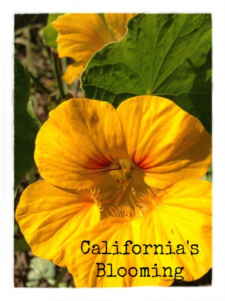 Post image for California's Blooming in February