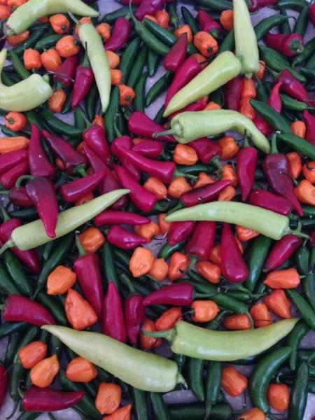 melisssa pepper1