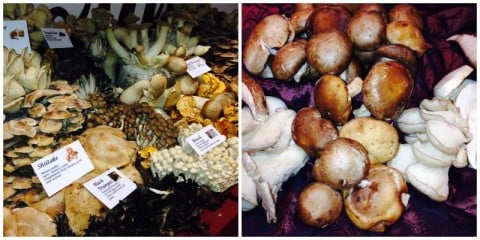 mushrooms of all kinds