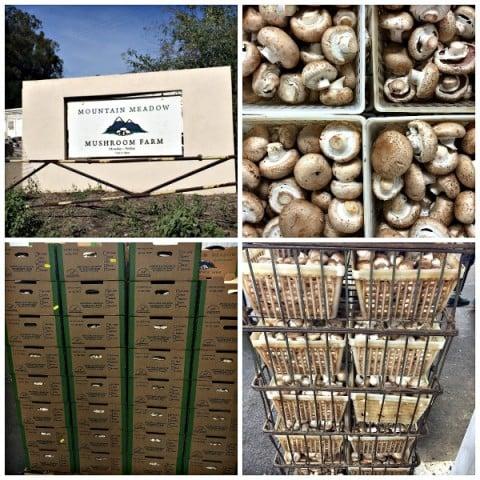 Mountain Meadow Mushroom Farm