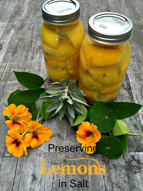 Post image for Preserving Lemons in Salt